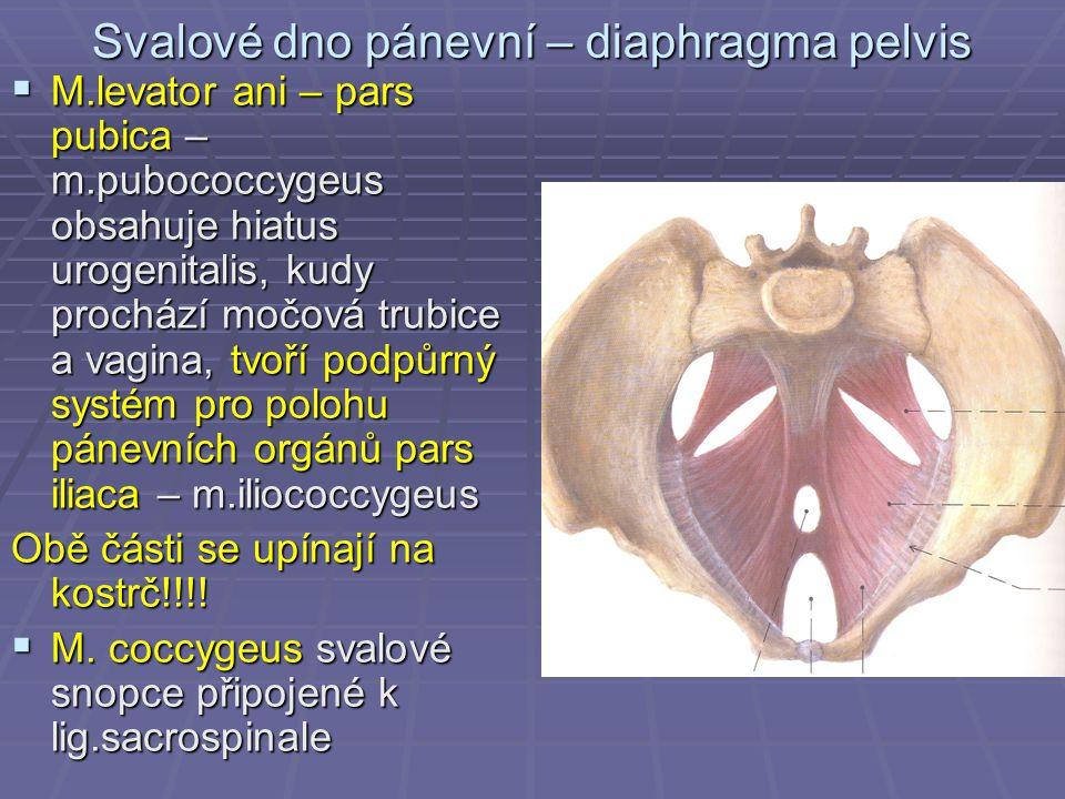 Svalové dno pánevní – diaphragma pelvis