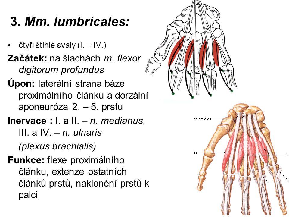 3. Mm. lumbricales: Začátek: na šlachách m. flexor digitorum profundus