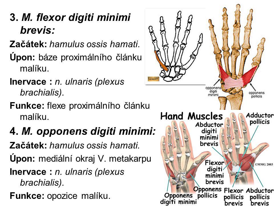 3. M. flexor digiti minimi brevis: