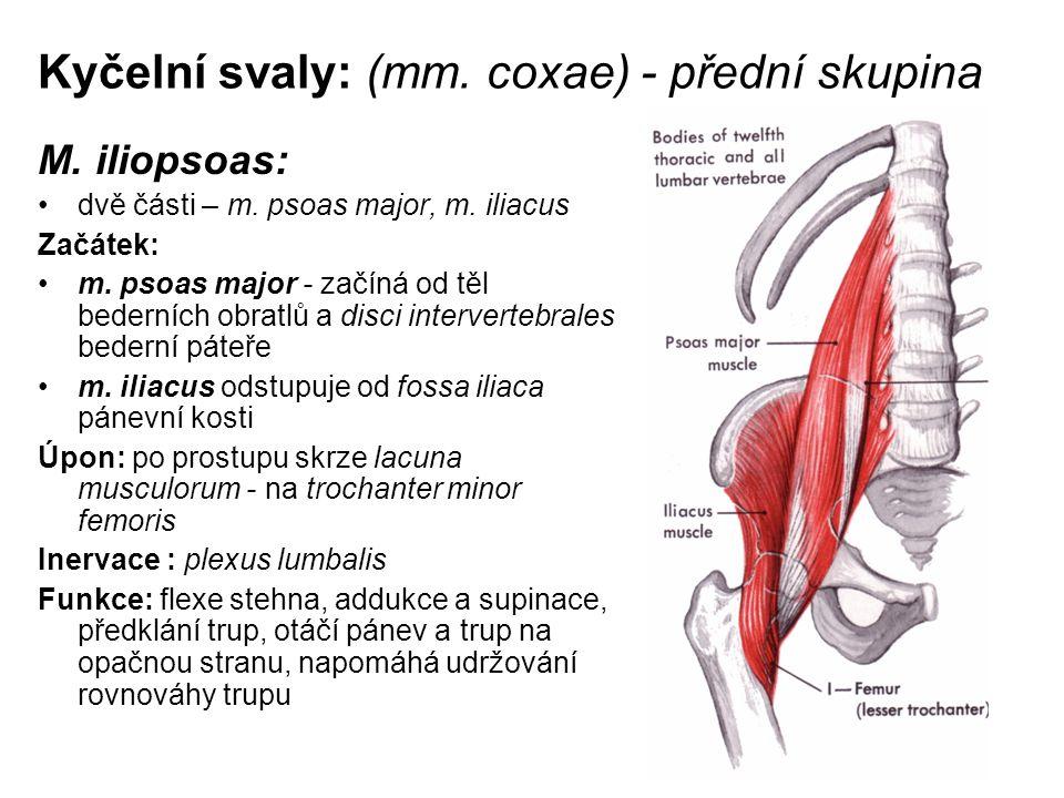 Kyčelní svaly: (mm. coxae) - přední skupina