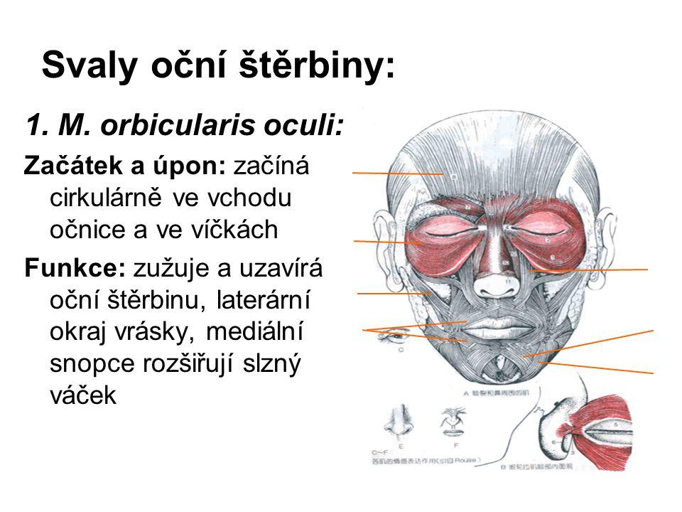 Svaly oční štěrbiny: 1. M. orbicularis oculi: