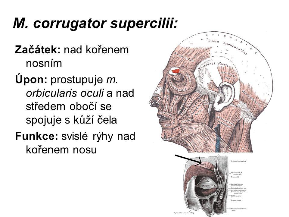 M. corrugator supercilii: