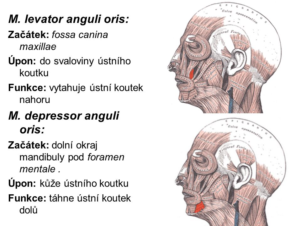 M. depressor anguli oris: