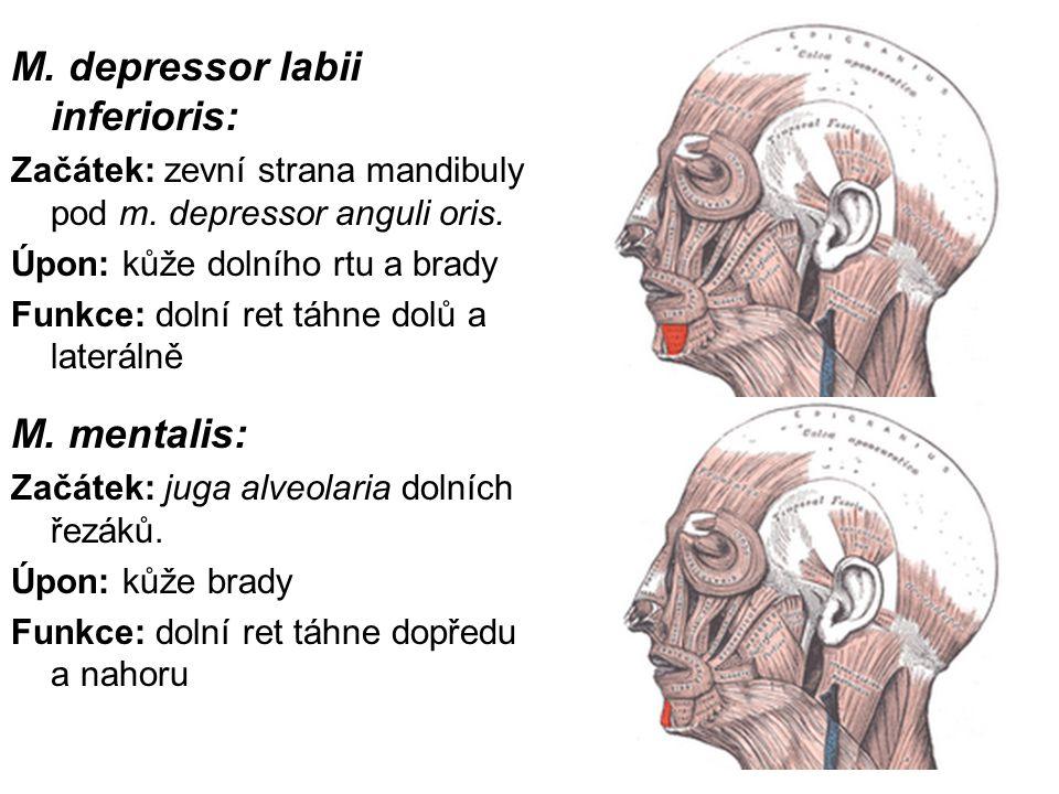 M. depressor labii inferioris:
