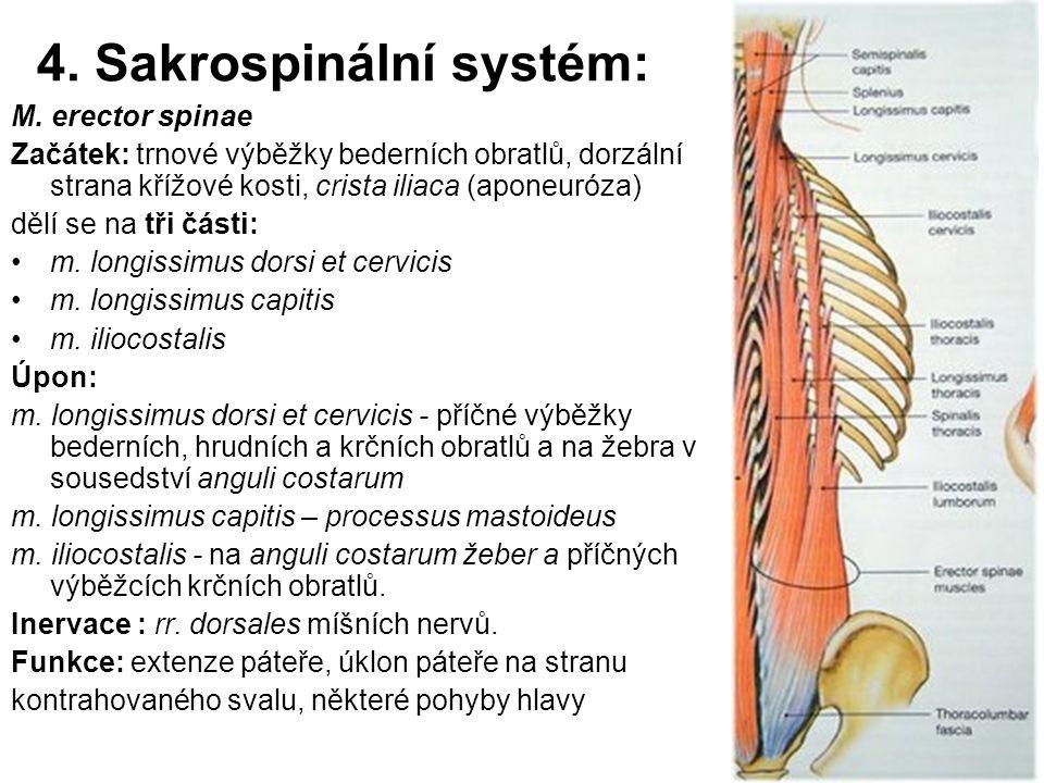 4. Sakrospinální systém:
