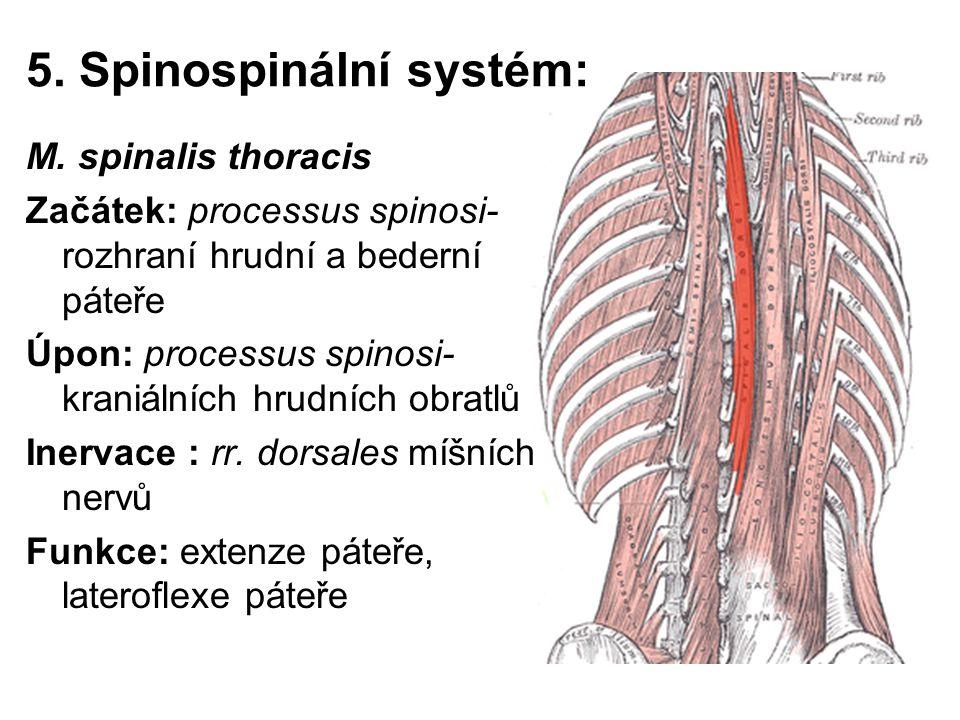 5. Spinospinální systém: