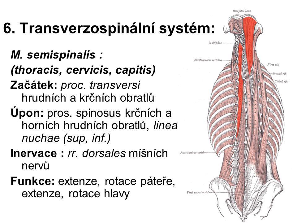 6. Transverzospinální systém: