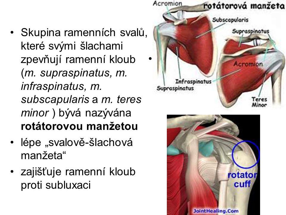 Skupina ramenních svalů, které svými šlachami zpevňují ramenní kloub (m. supraspinatus, m. infraspinatus, m. subscapularis a m. teres minor ) bývá nazývána rotátorovou manžetou