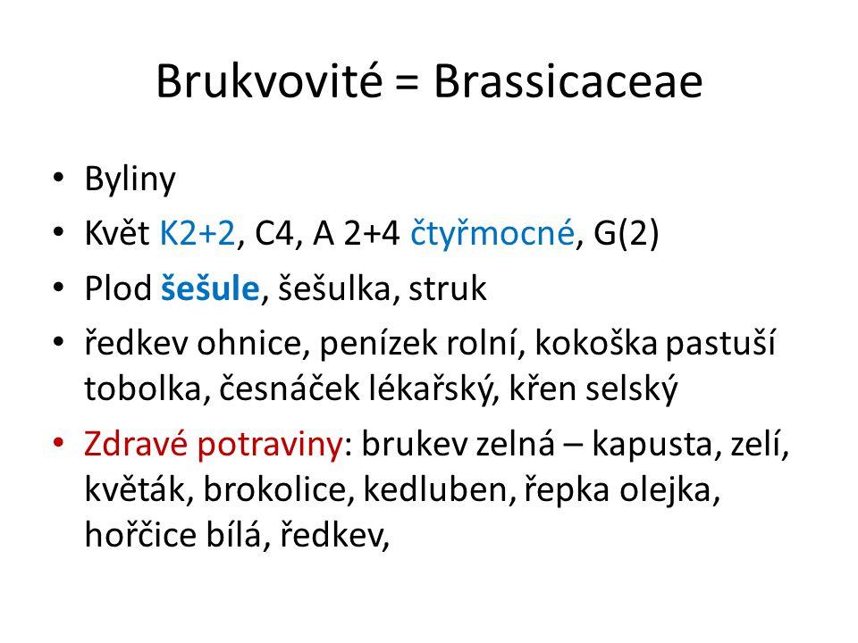 Brukvovité = Brassicaceae