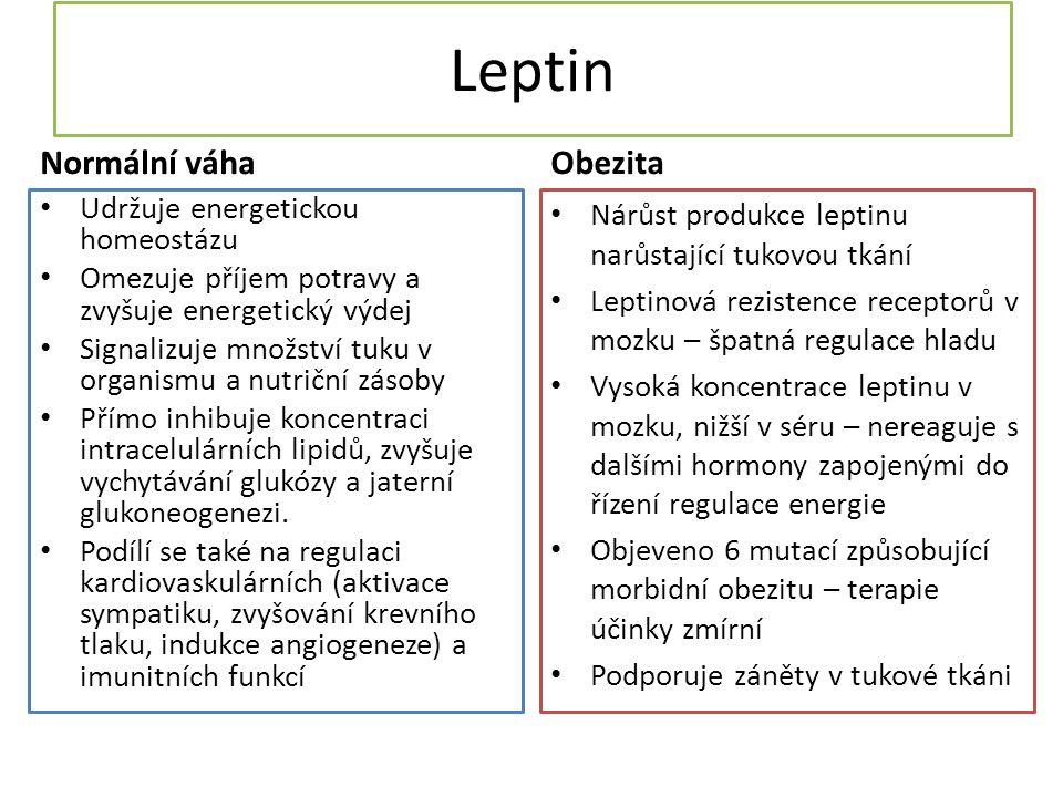 Leptin Normální váha Obezita Udržuje energetickou homeostázu