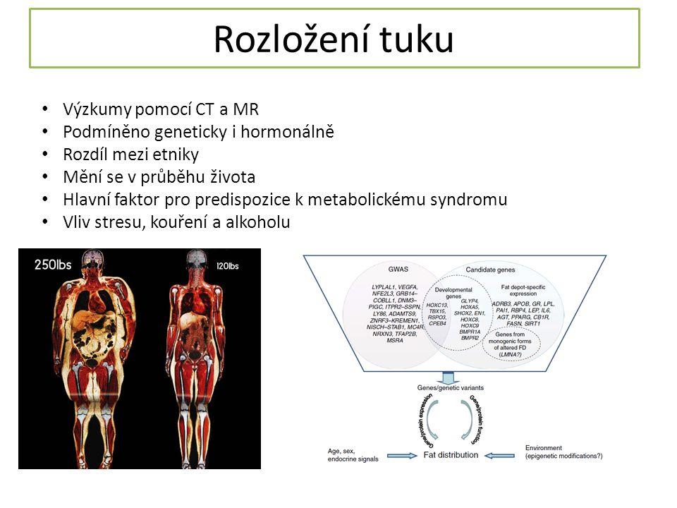 Rozložení tuku Výzkumy pomocí CT a MR Podmíněno geneticky i hormonálně