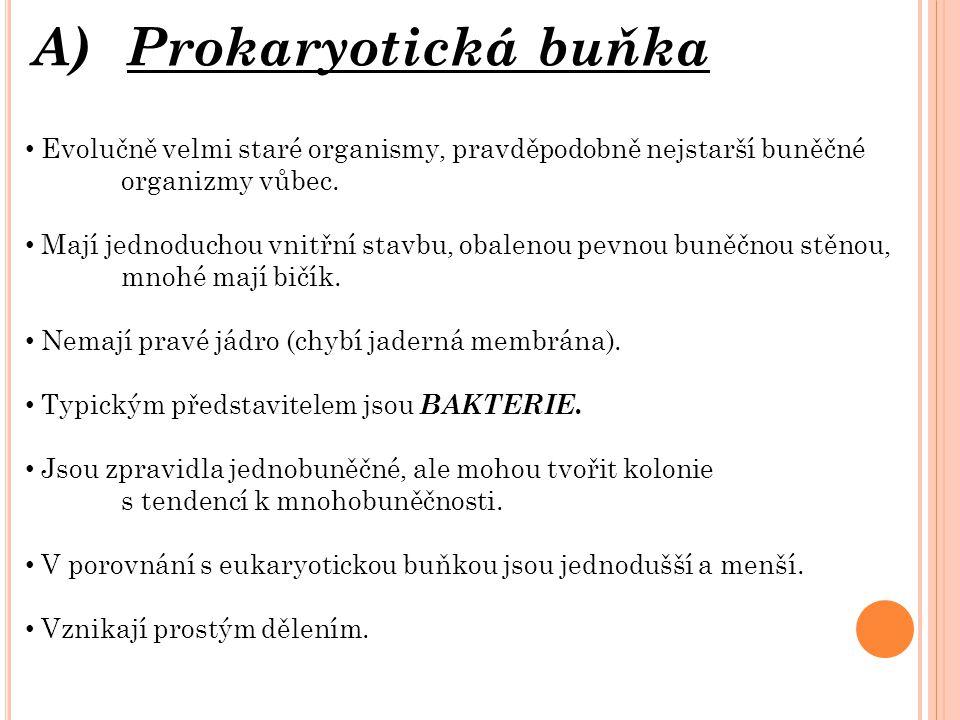 A) Prokaryotická buňka