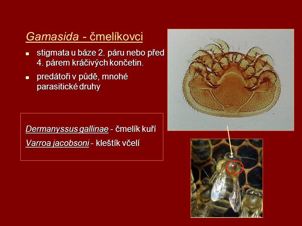Gamasida - čmelíkovci stigmata u báze 2. páru nebo před 4. párem kráčivých končetin. predátoři v půdě, mnohé parasitické druhy.