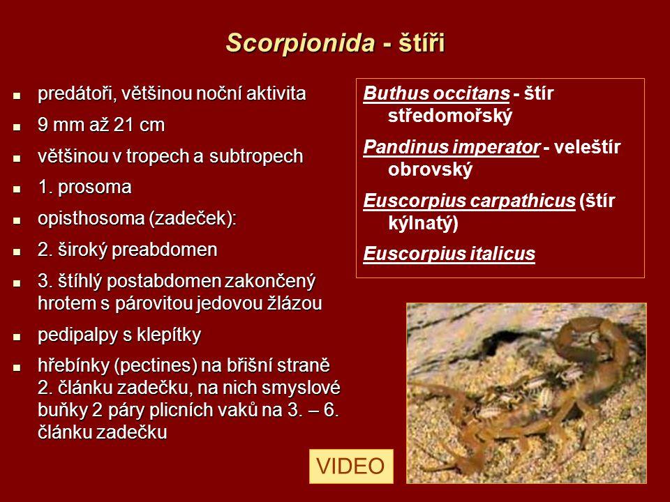 Scorpionida - štíři VIDEO predátoři, většinou noční aktivita