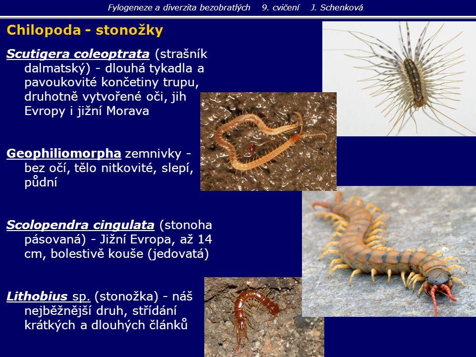 Fylogeneze a diverzita bezobratlých 9. cvičení J. Schenková