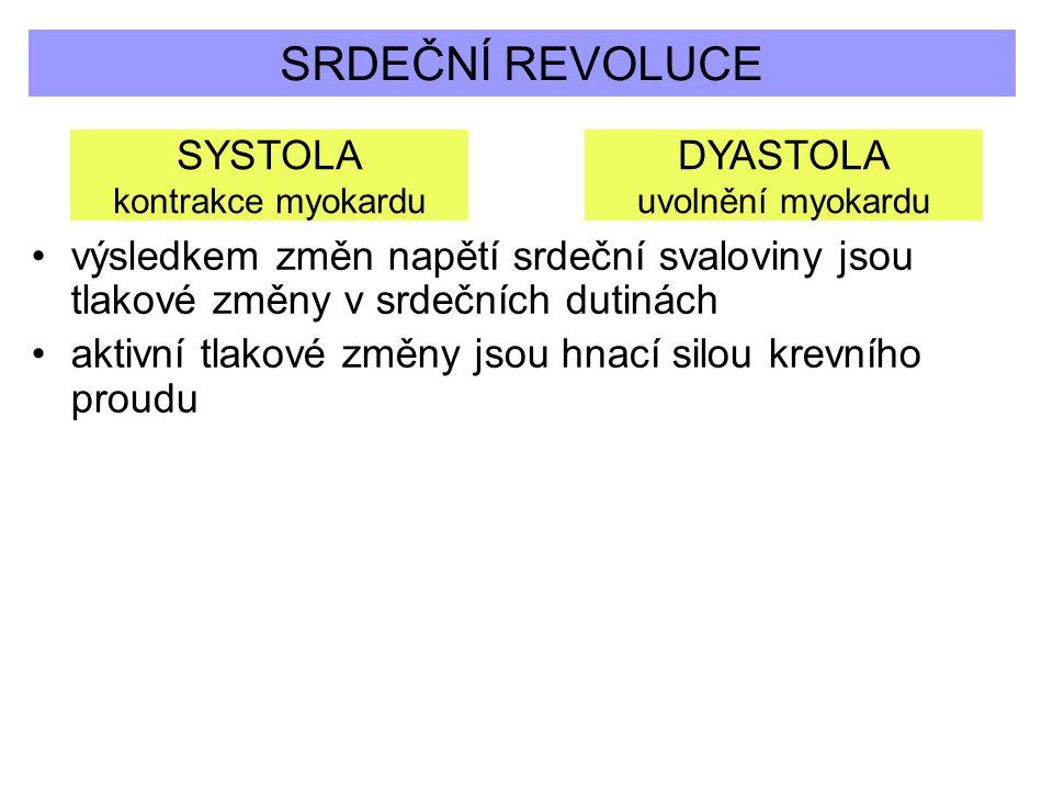 SRDEČNÍ REVOLUCE SYSTOLA kontrakce myokardu DYASTOLA uvolnění myokardu