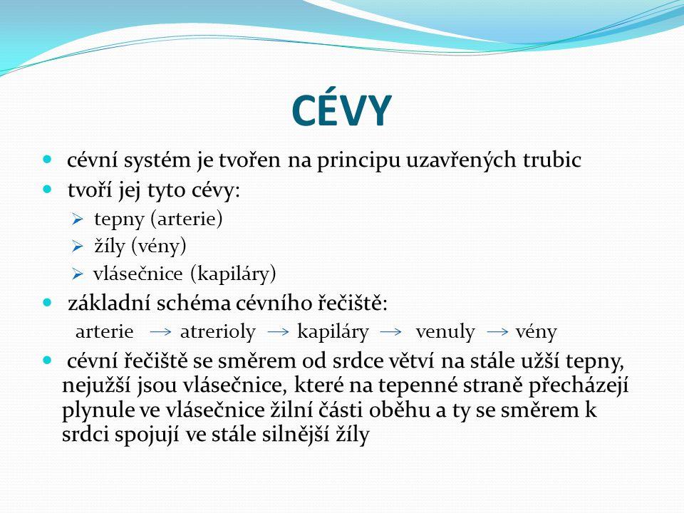 CÉVY cévní systém je tvořen na principu uzavřených trubic