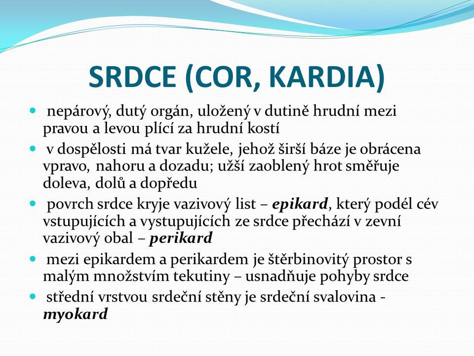 SRDCE (COR, KARDIA) nepárový, dutý orgán, uložený v dutině hrudní mezi pravou a levou plící za hrudní kostí.
