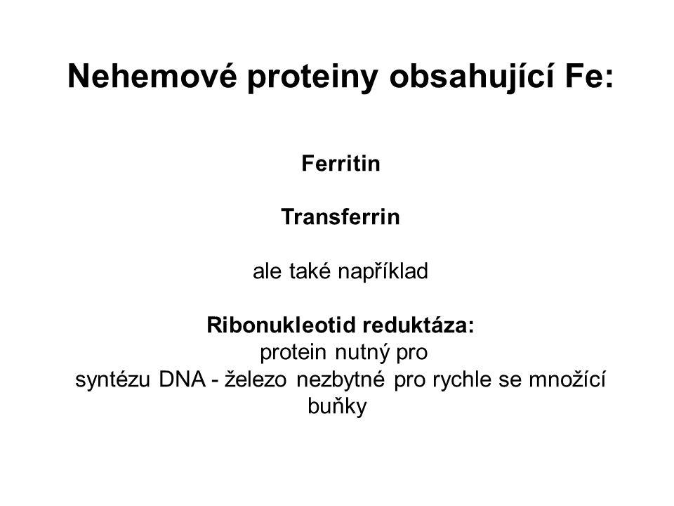 Nehemové proteiny obsahující Fe: Ribonukleotid reduktáza: