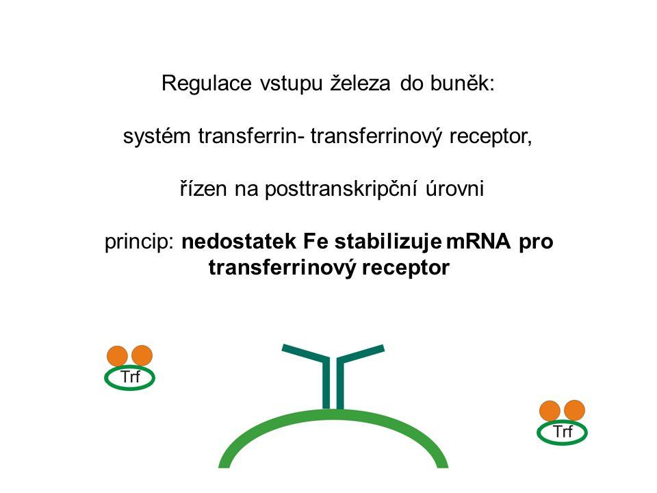 Regulace vstupu železa do buněk: