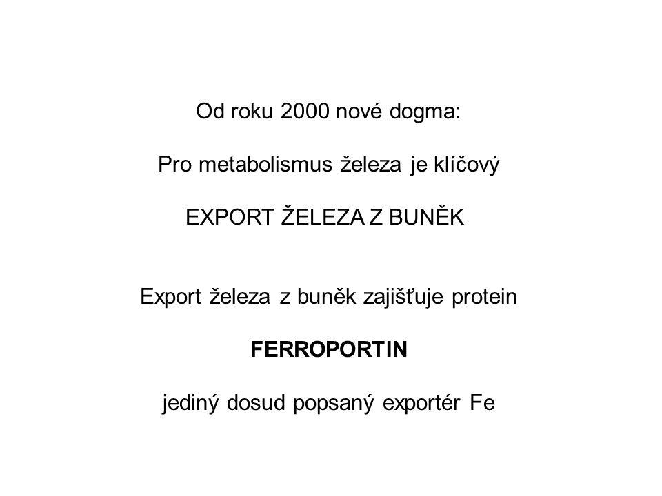 Pro metabolismus železa je klíčový EXPORT ŽELEZA Z BUNĚK