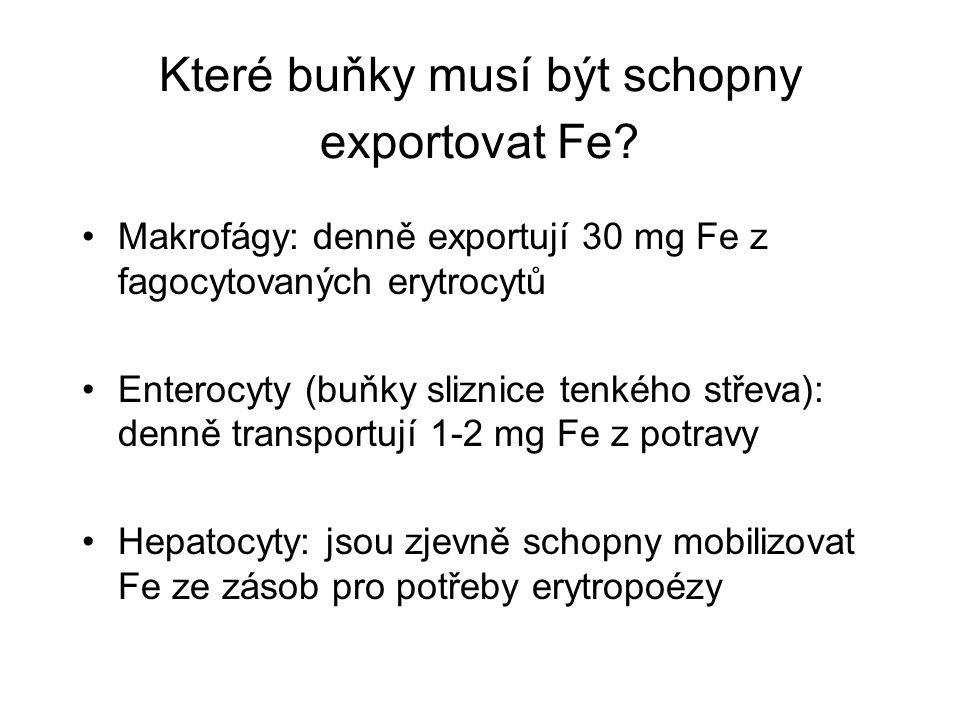 Které buňky musí být schopny exportovat Fe