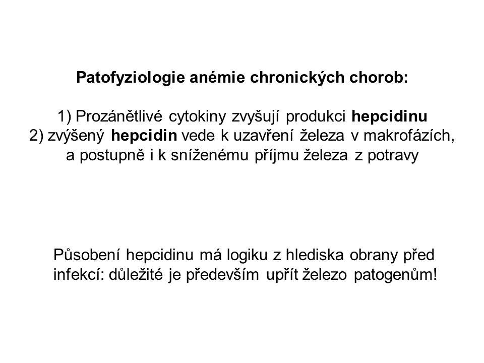 Patofyziologie anémie chronických chorob:
