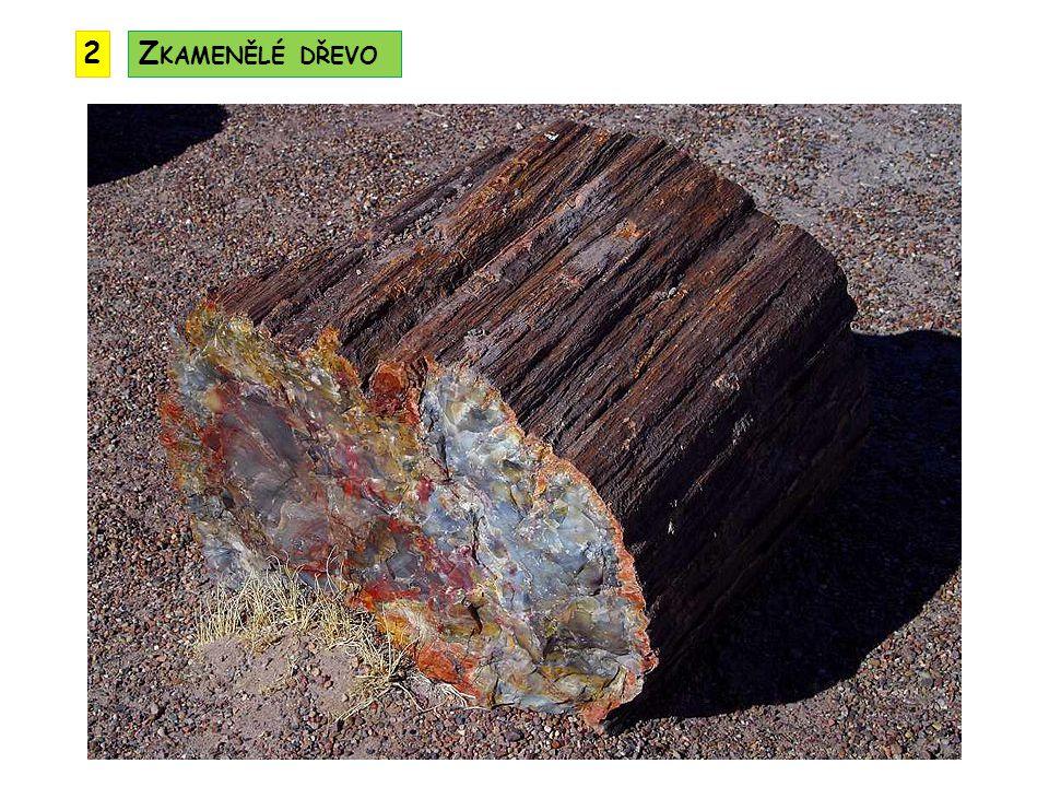 2 Zkamenělé dřevo