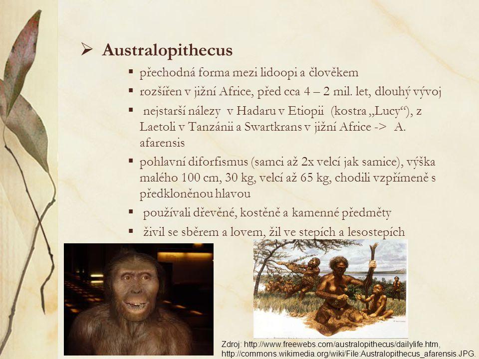 Amphipithecus, Pondaungia (eocénní vrstvy v Barmě, stáří až 44 mil