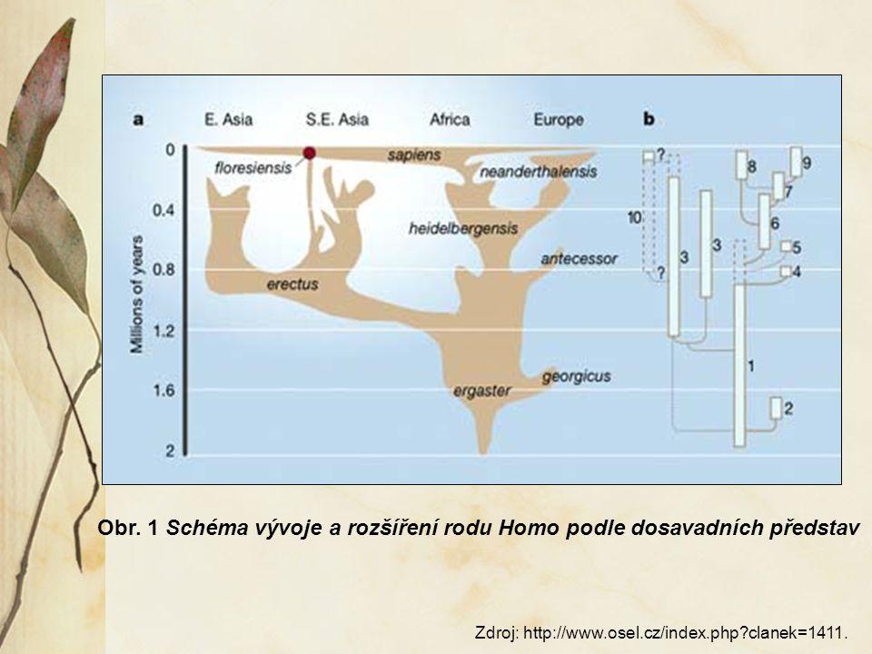 6. Rod Homo Odlišné znaky od Australopitéka:
