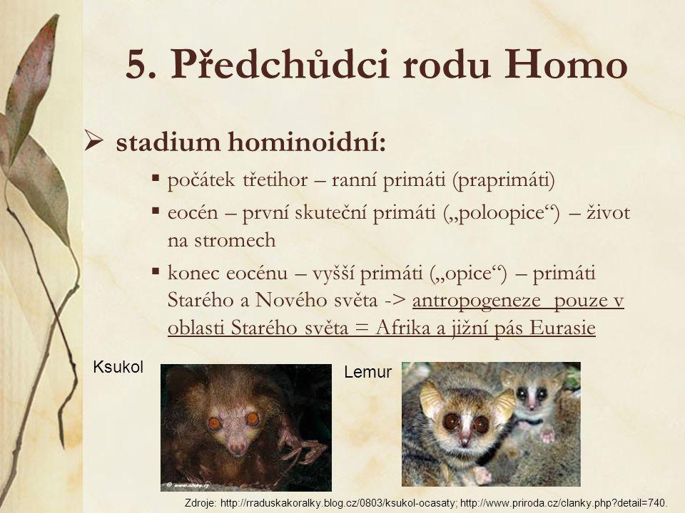4. Teorie vzniku rodu Homo