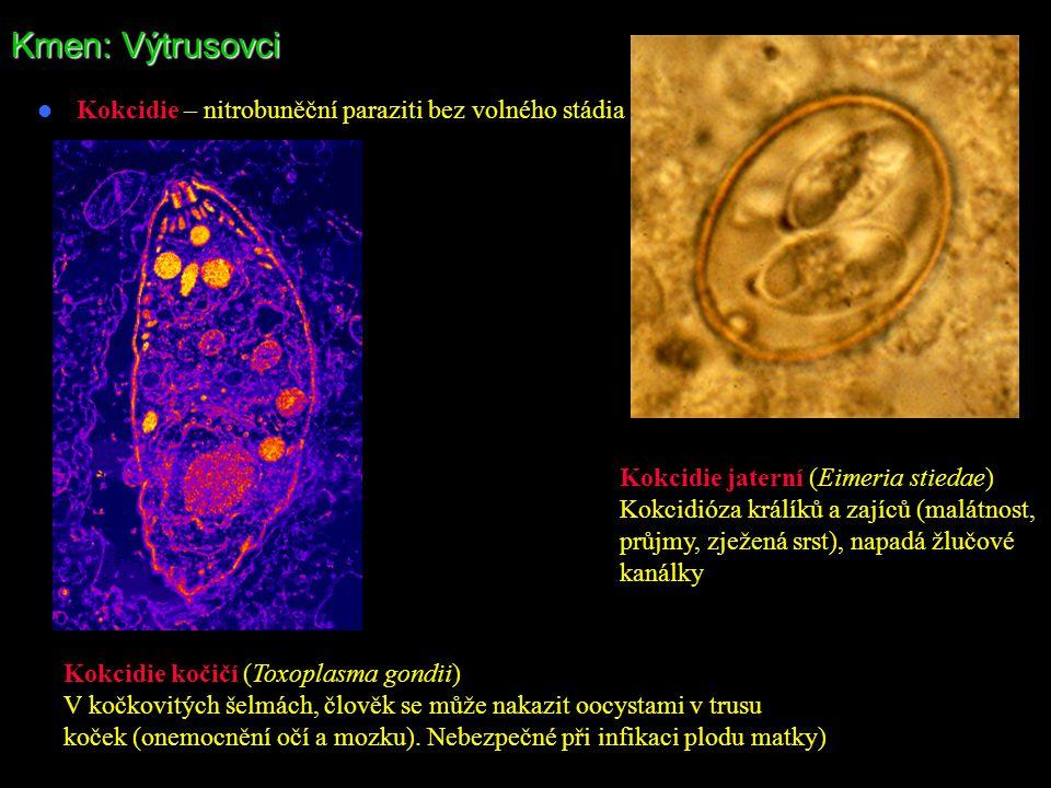 Kmen: Výtrusovci Kokcidie – nitrobuněční paraziti bez volného stádia