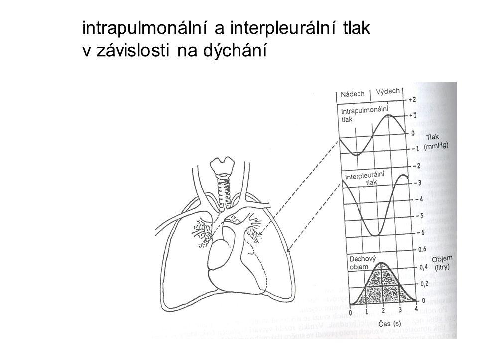 intrapulmonální a interpleurální tlak