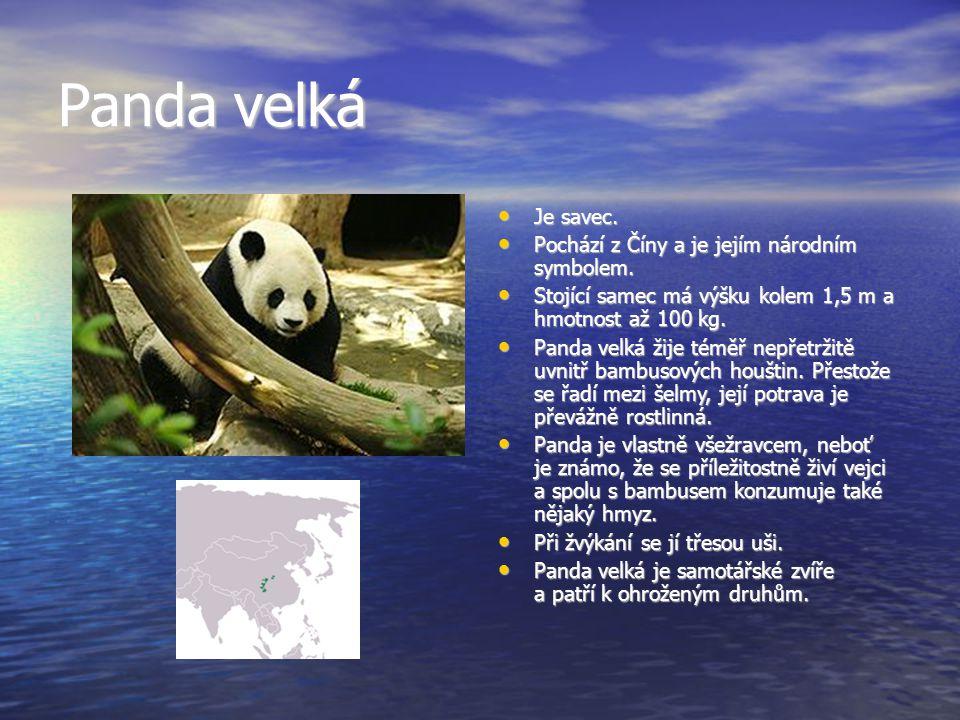 Panda velká Je savec. Pochází z Číny a je jejím národním symbolem.