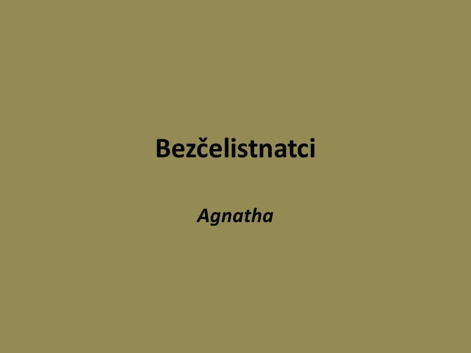 Bezčelistnatci Agnatha