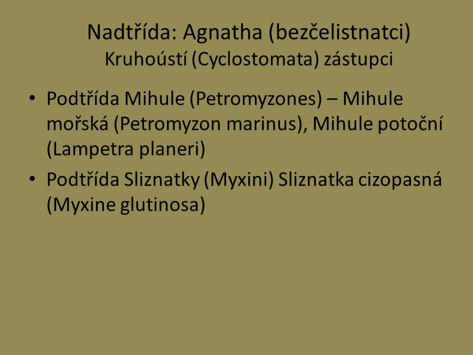 Nadtřída: Agnatha (bezčelistnatci) Kruhoústí (Cyclostomata) zástupci
