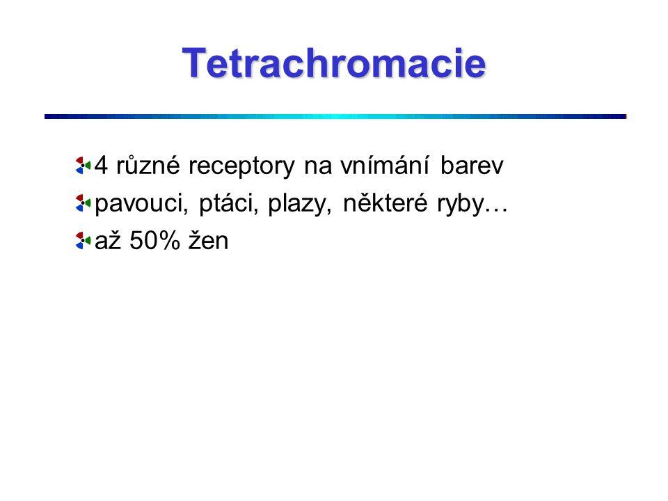 Tetrachromacie 4 různé receptory na vnímání barev