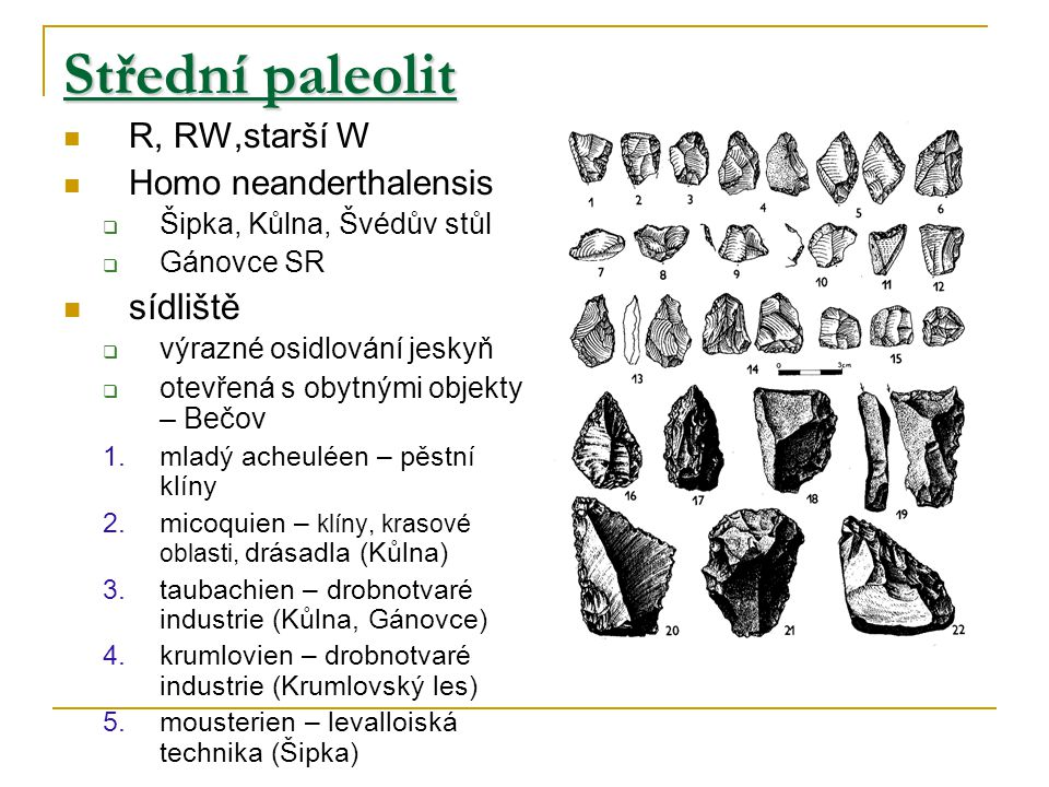 Střední paleolit sídliště R, RW,starší W Homo neanderthalensis