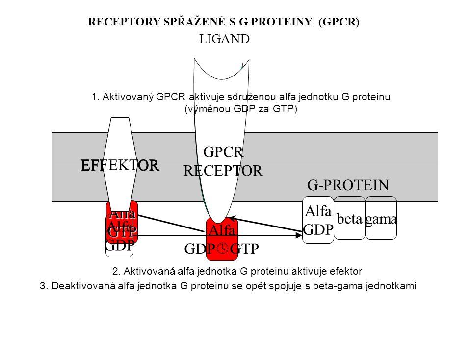 RECEPTORY SPŘAŽENÉ S G PROTEINY (GPCR)