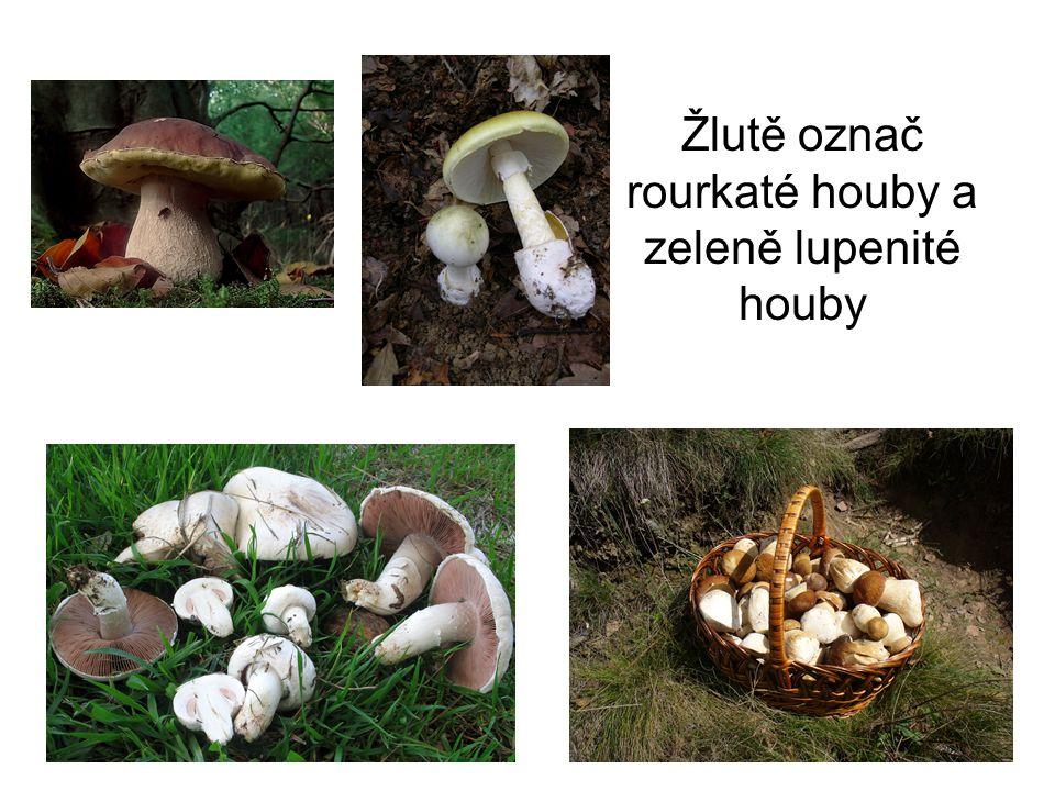 Žlutě označ rourkaté houby a zeleně lupenité houby