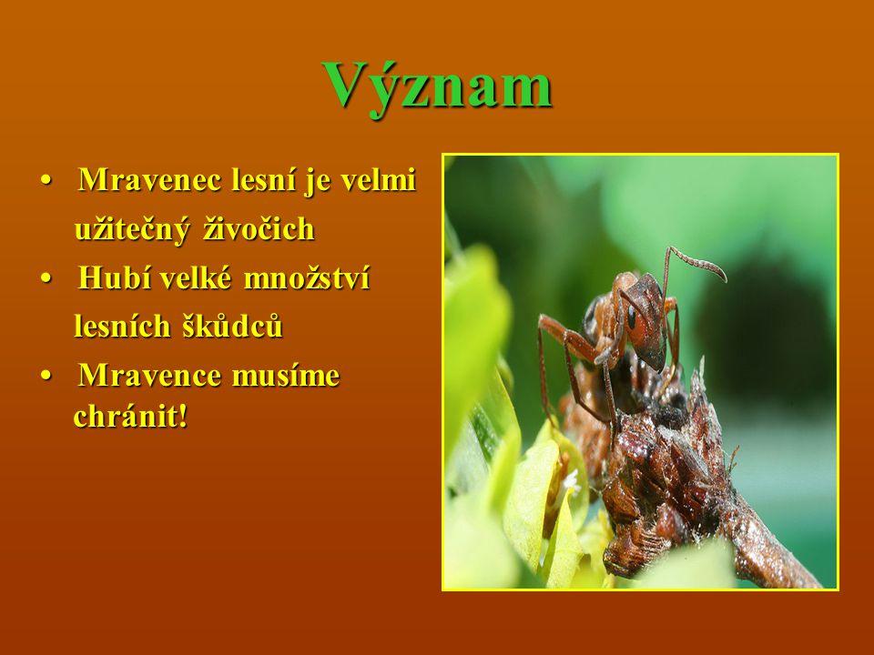 Význam • Mravenec lesní je velmi užitečný živočich • Hubí velké množství lesních škůdců • Mravence musíme chránit.