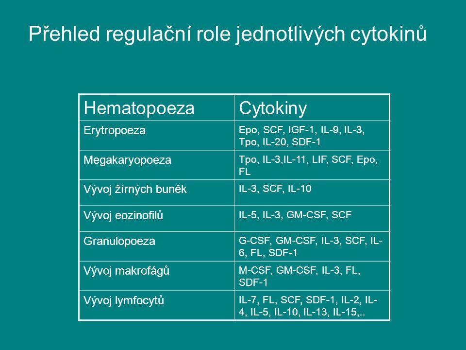 Přehled regulační role jednotlivých cytokinů