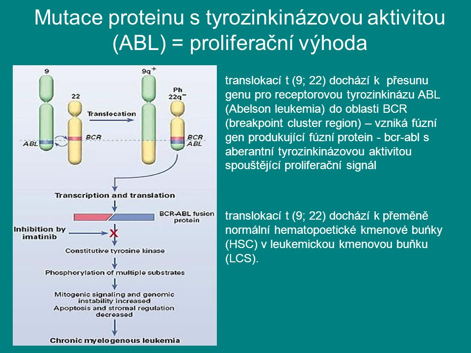 Mutace proteinu s tyrozinkinázovou aktivitou (ABL) = proliferační výhoda