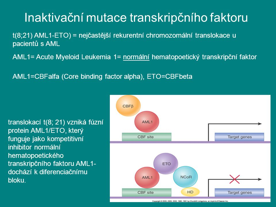Inaktivační mutace transkripčního faktoru