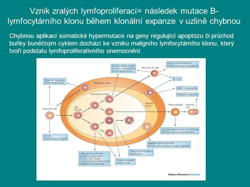 Vznik zralých lymfoproliferací= následek mutace B-lymfocytárního klonu během klonální expanze v uzlině chybnou