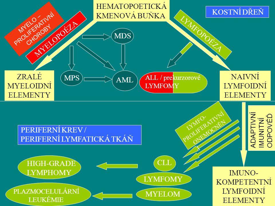 ZRALÉ MYELOIDNÍ ELEMENTY MPS NAIVNÍ LYMFOIDNÍ ELEMENTY AML
