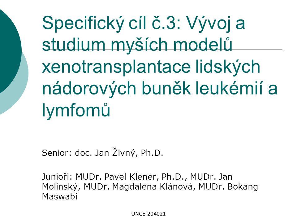 Specifický cíl č.3: Vývoj a studium myších modelů xenotransplantace lidských nádorových buněk leukémií a lymfomů