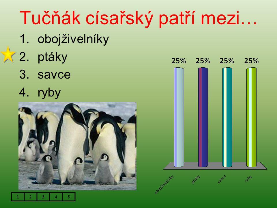 Tučňák císařský patří mezi…