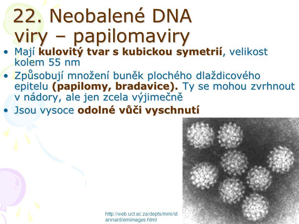 22. Neobalené DNA viry – papilomaviry