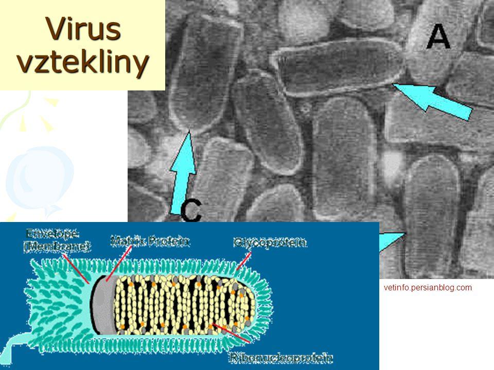 Virus vztekliny vetinfo.persianblog.com vetinfo.persianblog.com
